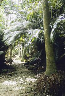 西表島の森の写真素材 [FYI04201549]