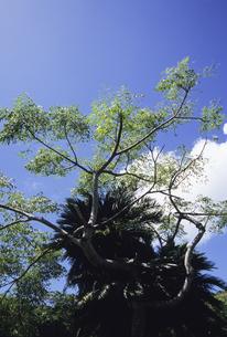 樹の写真素材 [FYI04201570]