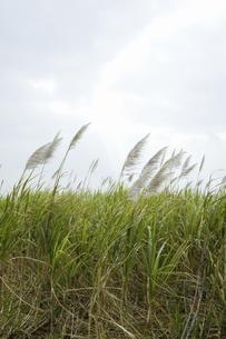草原とすすきの写真素材 [FYI04201713]
