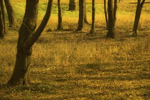 樹木の写真素材 [FYI04201843]