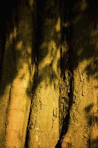 樹木の写真素材 [FYI04201846]