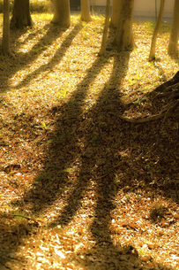 樹木の写真素材 [FYI04201852]