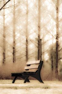 並木とベンチの写真素材 [FYI04201856]