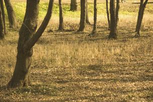 木立の写真素材 [FYI04202192]