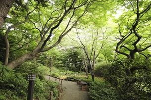 御殿山ガーデンの森林の写真素材 [FYI04202784]