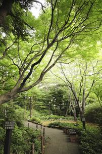 御殿山ガーデンの森林の写真素材 [FYI04202785]