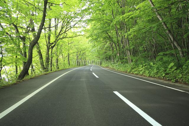 新緑の道の写真素材 [FYI04202934]