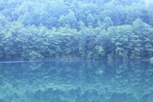 新緑の湖の写真素材 [FYI04203157]