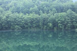 新緑の湖の写真素材 [FYI04203158]