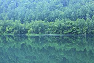 新緑の湖の写真素材 [FYI04203161]