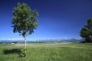 白樺の木と十勝連峰の写真素材 [FYI04203219]