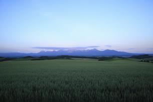 麦畑と夕焼けの十勝連山の写真素材 [FYI04203225]