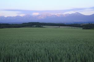 麦畑と夕焼けの十勝連山の写真素材 [FYI04203227]