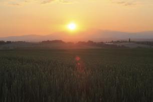 朝日昇る朝焼けの麦畑の写真素材 [FYI04203228]