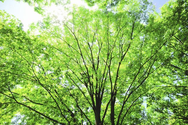 新緑の写真素材 [FYI04204235]