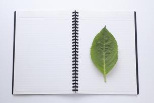 ノートにのせた緑の葉の写真素材 [FYI04205294]