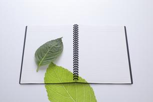 ノートにのせた緑の葉の写真素材 [FYI04205296]