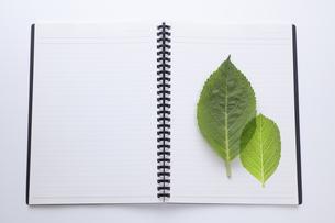 ノートにのせた緑の葉の写真素材 [FYI04205298]
