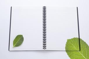 ノートにのせた緑の葉の写真素材 [FYI04205299]