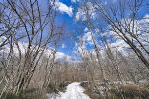 春先の森の写真素材 [FYI04206931]
