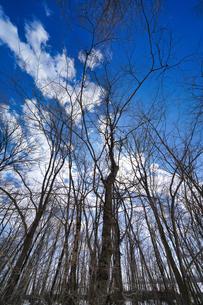 冬の森の写真素材 [FYI04206932]