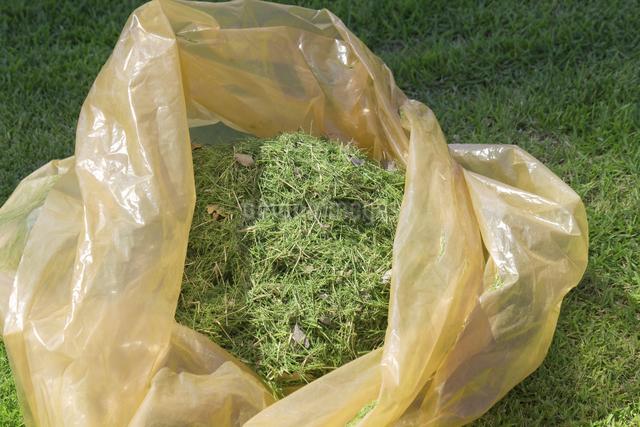 芝,芝生,芝刈り,ゴミ袋,の写真素材 [FYI04207131]