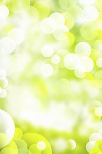 新緑の写真素材 [FYI04209130]