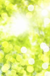 新緑の写真素材 [FYI04209137]