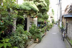 東京 根津の町並みの写真素材 [FYI04209523]