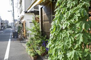 東京 谷中の町並みの写真素材 [FYI04209524]