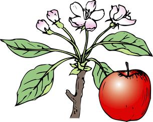 リンゴの花のイラスト素材 [FYI04213044]