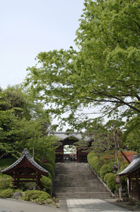 護国寺の不老門の写真素材 [FYI04214780]