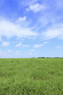 草原の空と雲の写真素材 [FYI04215714]