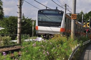 電車とコスモスの写真素材 [FYI04217931]