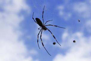 クモの巣とクモの写真素材 [FYI04219424]