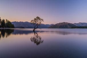 Wanaka Tree_ワナカ湖_ニュージーランドの写真素材 [FYI04223374]