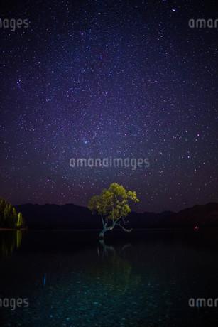 星空_Wanaka Tree_ニュージーランドの写真素材 [FYI04223376]