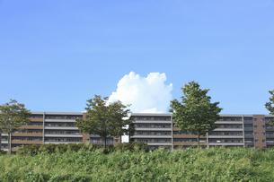 樹木とマンションの写真素材 [FYI04223582]