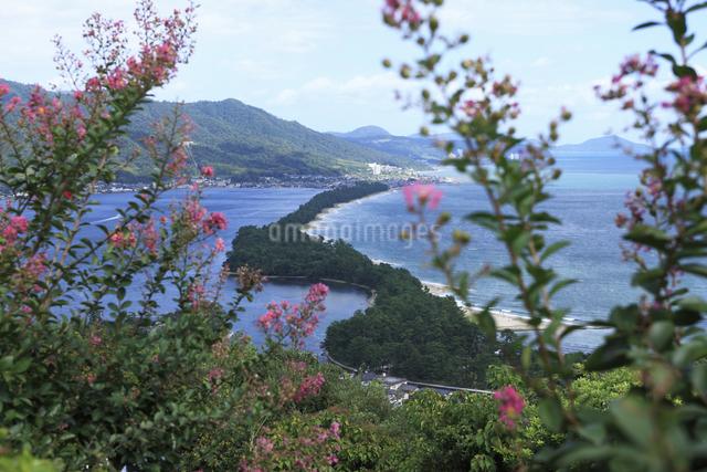 天橋立とサルスベリの花の写真素材 [FYI04223743]