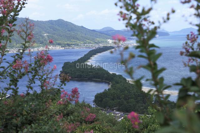 天橋立とサルスベリの花の写真素材 [FYI04223744]