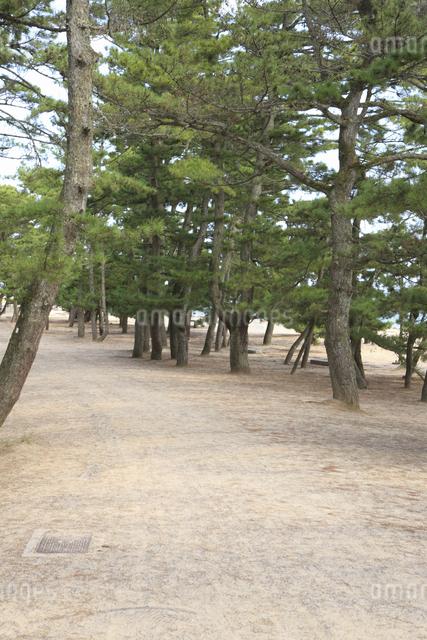 松並木の道の写真素材 [FYI04223778]