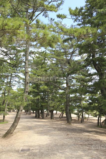 松並木の道の写真素材 [FYI04223784]