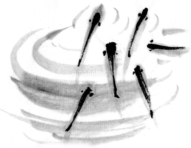メダカのイラスト素材 [FYI04226490]