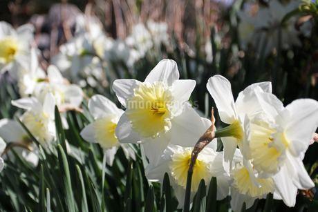 flowerの写真素材 [FYI04228327]
