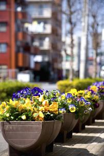 花壇のある街のイラスト素材 [FYI04228742]