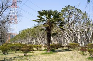 松葉町緑地の樹々のイラスト素材 [FYI04228748]