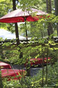 日本庭園の緑に囲まれた休憩処のイラスト素材 [FYI04228829]