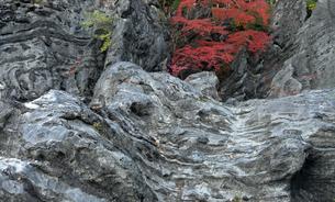 【地学教材】 石灰岩に形成された横臥褶曲の写真素材 [FYI04230144]