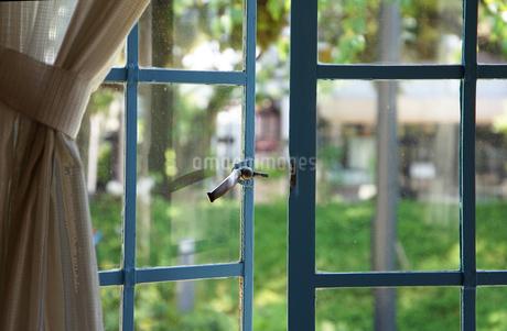 緑の庭の見える窓の写真素材 [FYI04233098]