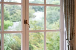 部屋の窓とカーテンの写真素材 [FYI04233338]